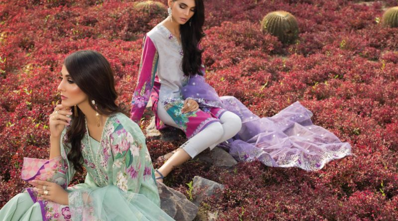 Beech Tree Lawn Collection 2019